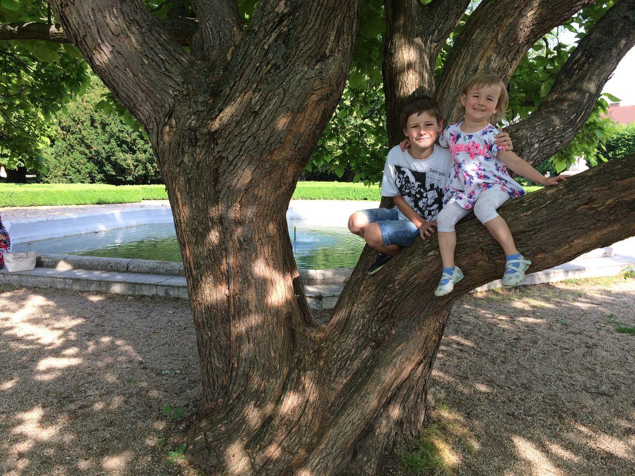 Na stromě ve Slavkově
