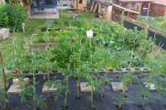 Zahrada 2020