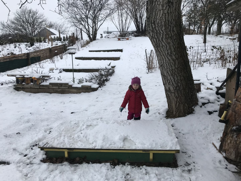 Na zahradě ve sněhu